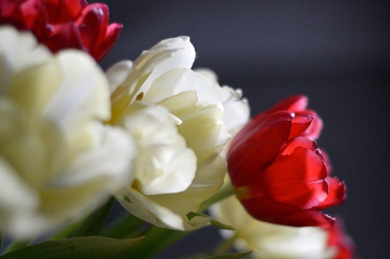 tulppaanit_tulips_kiitollisuus_hannamarirahkonen_yellowmood4