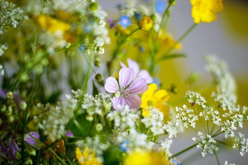 Kesäkukat_summerflowers_hannamarirahkonen1190
