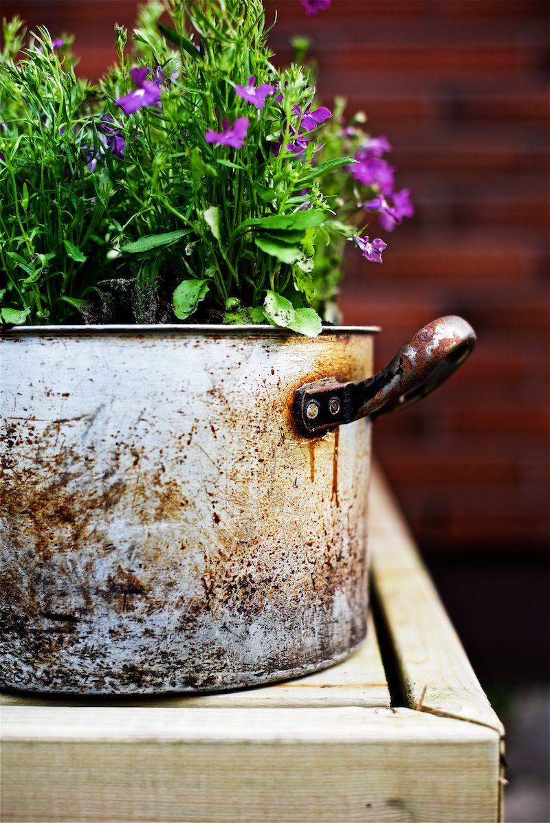 gardening_kauniistikotimainen_yellowmoodgarden (2)