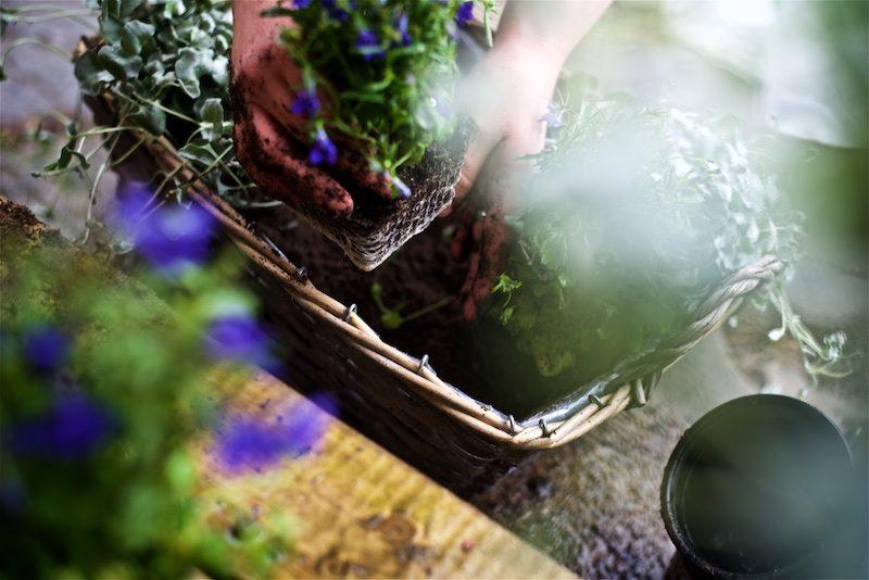 gardening_kauniistikotimainen_yellowmoodgarden11