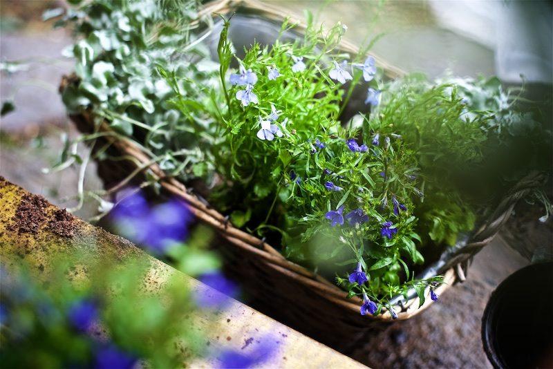 gardening_kauniistikotimainen_yellowmoodgarden12