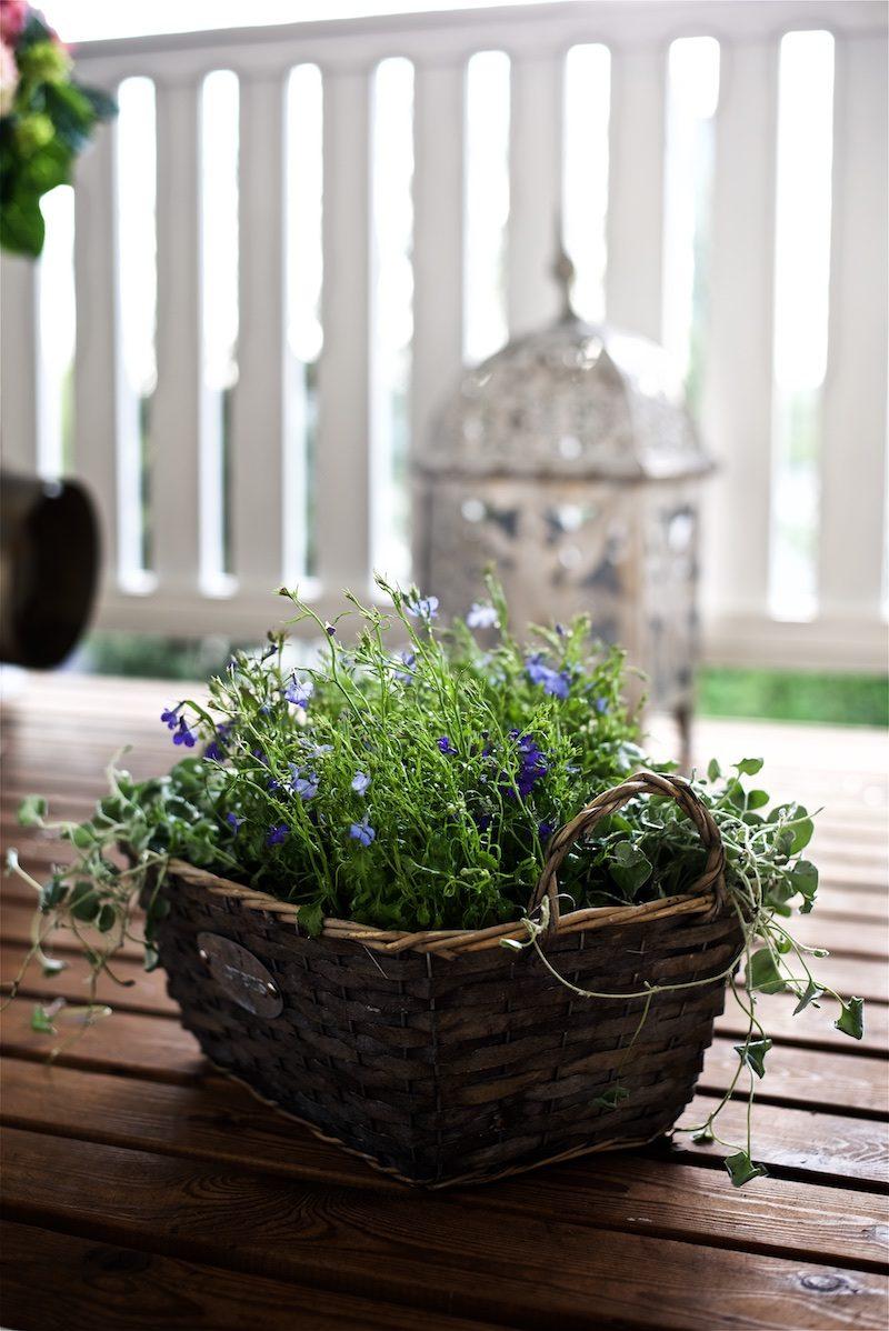 gardening_kauniistikotimainen_yellowmoodgarden13