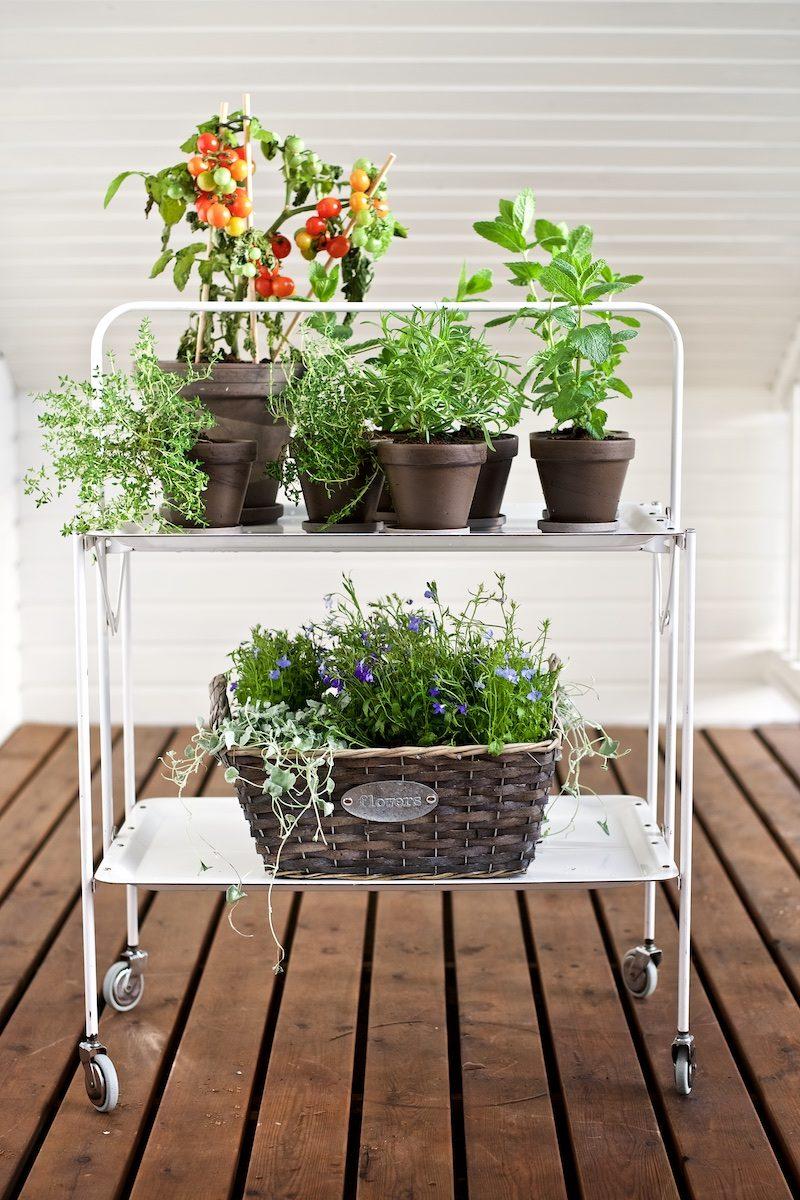 gardening_kauniistikotimainen_yellowmoodgarden16