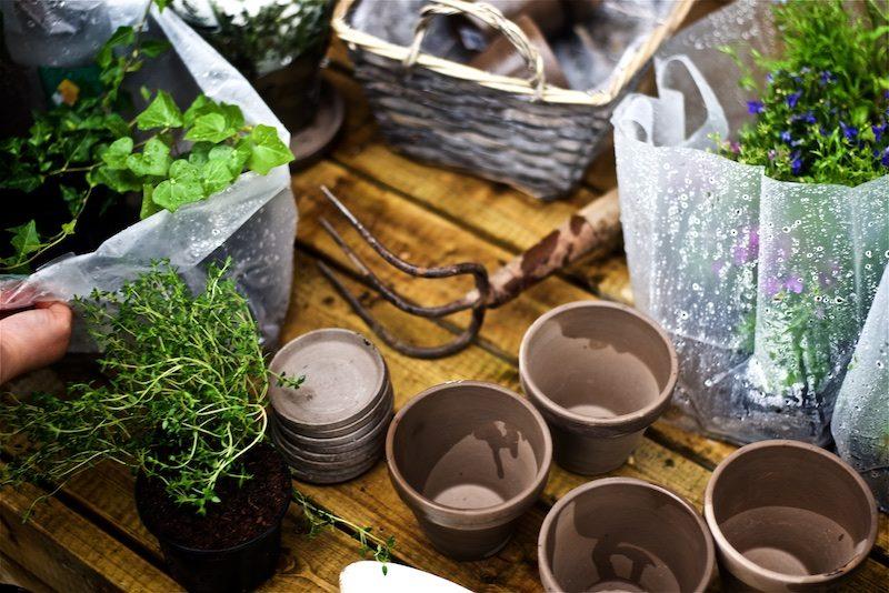 gardening_kauniistikotimainen_yellowmoodgarden2