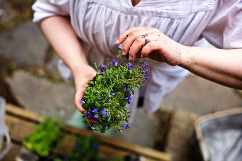gardening_kauniistikotimainen_yellowmoodgarden7