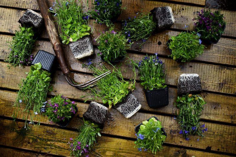 gardening_kauniistikotimainen_yellowmoodgarden9