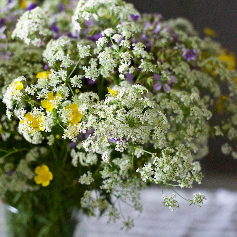 summerflowers-kukat-visitfinland 2