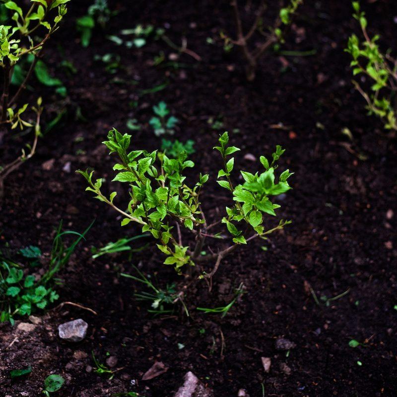 yard_garden_yellowmood 7