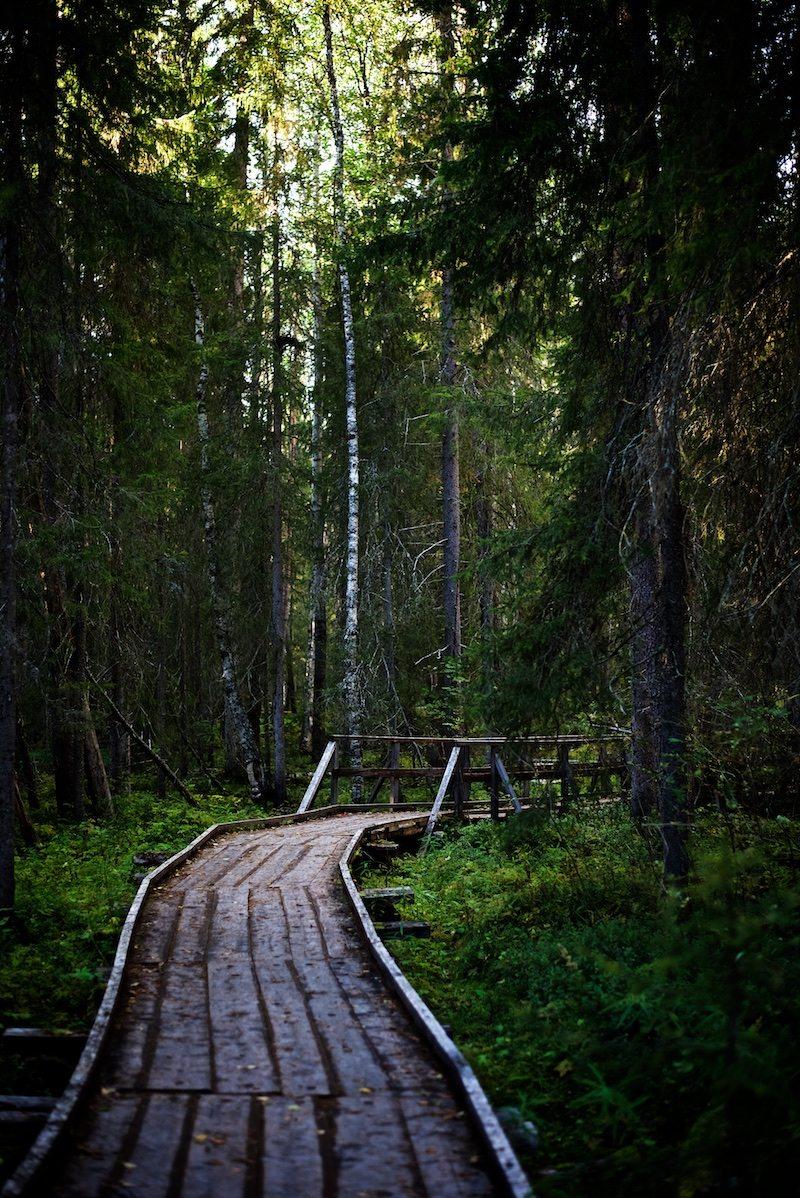 VIsitrovaniemi-yellowmood-vaattunkikongas-lapland-nature-visitlapland-hannamarirahkonen 21