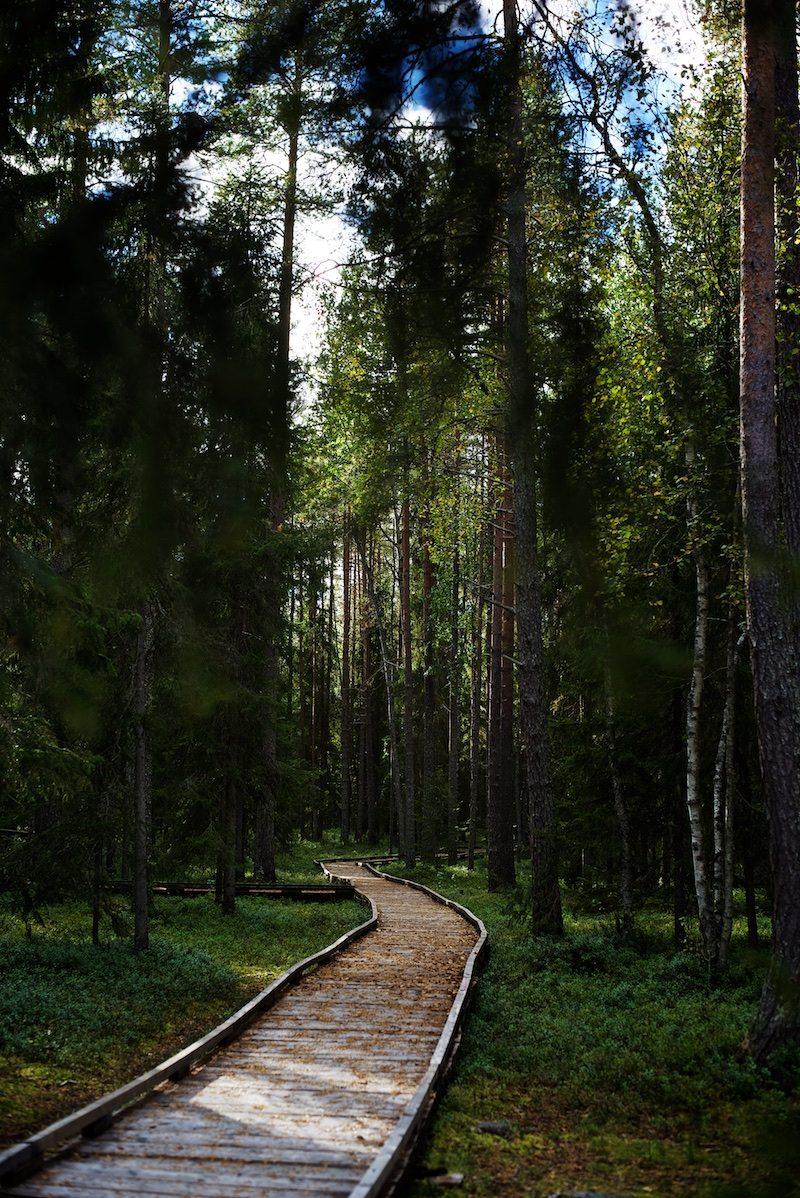 VIsitrovaniemi-yellowmood-vaattunkikongas-lapland-nature-visitlapland-hannamarirahkonen 9