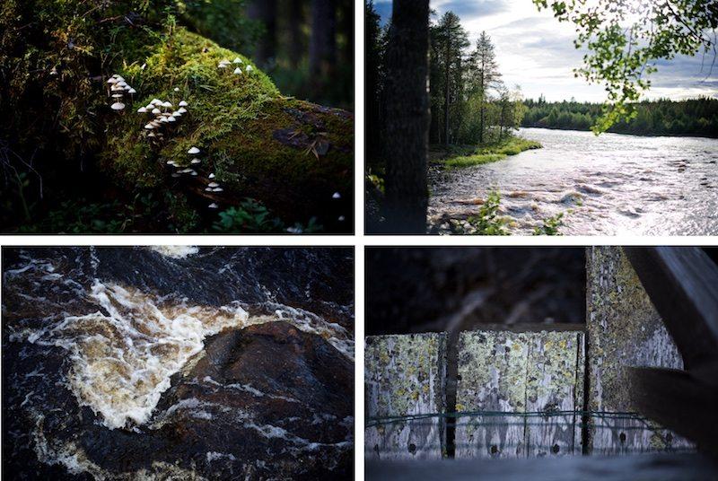 Visitrovaniemi-yellowmood-vaattunkikongas-lapland-nature-visitlapland-hannamarirahkonen 2