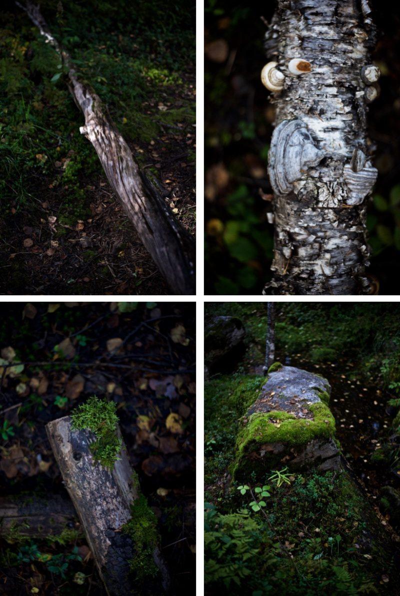 Visitrovaniemi-yellowmood-vaattunkikongas-lapland-nature-visitlapland-hannamarirahkonen 3