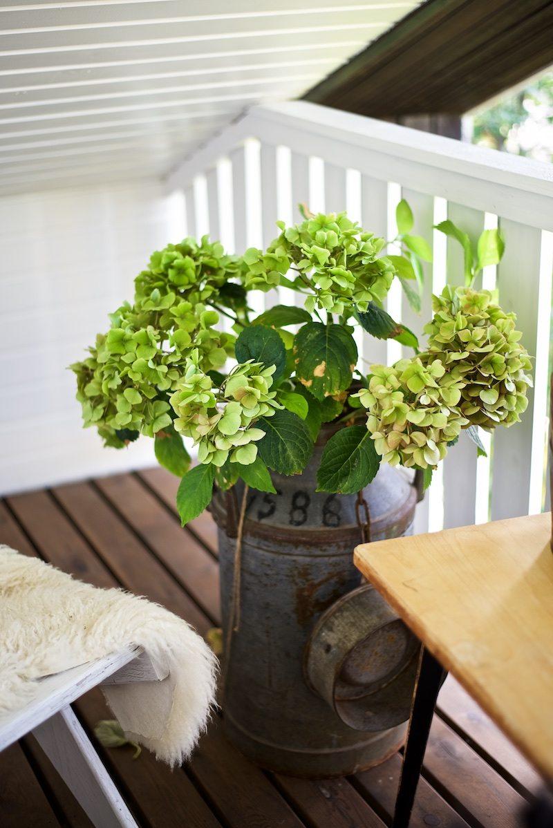 hydrangea-hortensia-gardening-yellowmood-hannamarirahkonen 2
