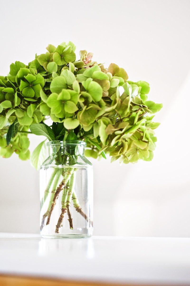 hydrangea-hortensia-gardening-yellowmood-hannamarirahkonen 7