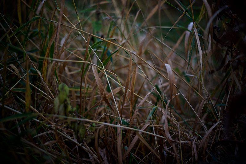 rovaniemi-jatkankynttila-visitlapland-japanisechin-mittelspitz-20