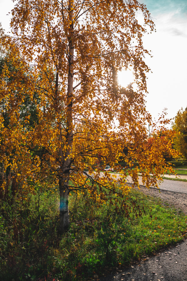 Yellowmood Autumn Tree